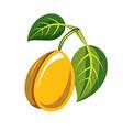 Harvesting symbol single fruit isolated Single vector image vector image