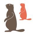 Marmot vector image vector image