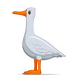 goose bird on a white background vector image vector image