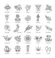 herbs collection medical healthy herbs vector image vector image