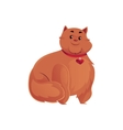 Cute and funny fat chubby fluffy red cat vector image vector image