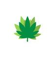 marijuana leaf logo icon graphic design template vector image vector image