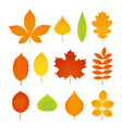 autumn leaves set symbols fall leaf vector image