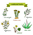 medicinal plants hand drawn vector image vector image