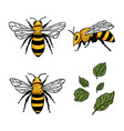 set with bees and leaves hand drawn vector image vector image