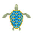 Water turtle Sapphire carapace Marine animal with vector image