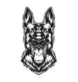 monochrome concept shepherd dog vector image