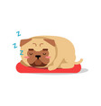 cute cartoon pug dog character sleeping on red mat vector image