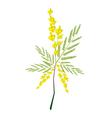 Fresh Sesbania Javanica Plant on White Background vector image vector image