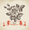Rose hand drawn vintage design vector image vector image