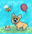 a corgi animal dog playing vector image vector image