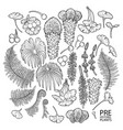 collection of prehistoric plants vector image vector image