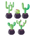 different types of cactus in clay pots vector image