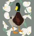 duck over calla lilies vector image