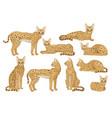 flat set of african serval graceful wild vector image vector image