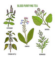 best herbs for blood purifying tea vector image vector image