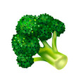 broccoli cabbage icon isometric style vector image