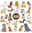 cartoon purebred dog characters large set vector image