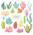 seaweeds aquarium plants underwater planting vector image vector image