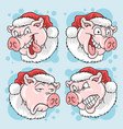 christmas santa claus pig head pork 4 expression vector image