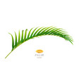palm tree branch exotic and tropical foliage vector image