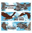 predatory eagle and hawk birds falconry wild hunt vector image