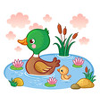 a duck with ducklings floats on the lake vector image