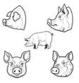 set pig pork head design element for emblem vector image