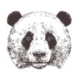 sketch giant panda animal sketch vector image