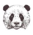 sketch giant panda animal sketch vector image vector image
