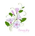 decorative wedding element convolvulus bouquet vector image vector image