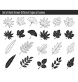 Set of hand drawn different types of leaves vector image