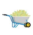 wheelbarrow and zucchini vegetables in garden vector image vector image