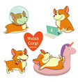 cute welsh corgi set in different poses funny vector image