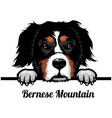 bernese mountain dog - dog breed color image vector image vector image