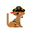 cat pirate home pet buccaneer filibuster hat and vector image vector image