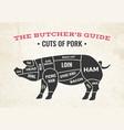 cuts pork butchery diagram vector image