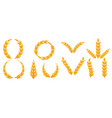 field grain set ear wheat harvest farm bread rye vector image