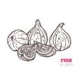 fresh figs hand drawn vector image