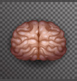 human brain realistic 3d poster transparent vector image vector image
