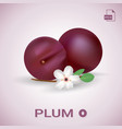 set of two fresh ripe plums with leaves and vector image vector image