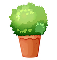 A green potted plant vector image vector image