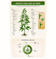 benefits and uses hemp vertical texttbook vector image