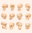 human skull face isolated on vector image vector image