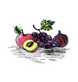 ink drawing grape vector image