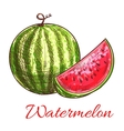 Watermelon fruit with juicy slice sketch vector image
