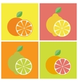 Citrus fruits icons vector image