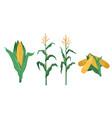 corn in flat cartoon style vector image vector image