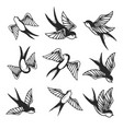 set of swallow on white background design element vector image