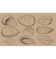 coconut on white background Isolated nuts vector image vector image